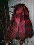 в Санкт-Петербурге шкуры енота натурального цвета и красного цвета