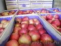 Свежие фрукты,  яблоки из Сербии !