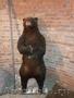 продам чучело медведя