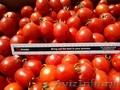 Продам помидоры с Украины за низкими ценами