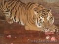 тигрята питомник ручные