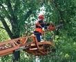 Спил любого дерева. Обрезка деревьев