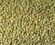 Чечевица зеленая продовольственная (в мешках) FOB Новороссийск,  Россия
