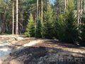 Посадка и продажа крупномерных деревьев
