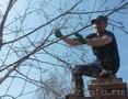 Весенняя обрезка плодовых деревьев и кустарников +79277770575,  Самара,  Тольятти