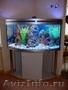 Профессиональное обслуживание аквариумов и их комплектующих. Установка
