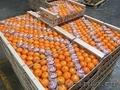 Свежие фрукты оптом
